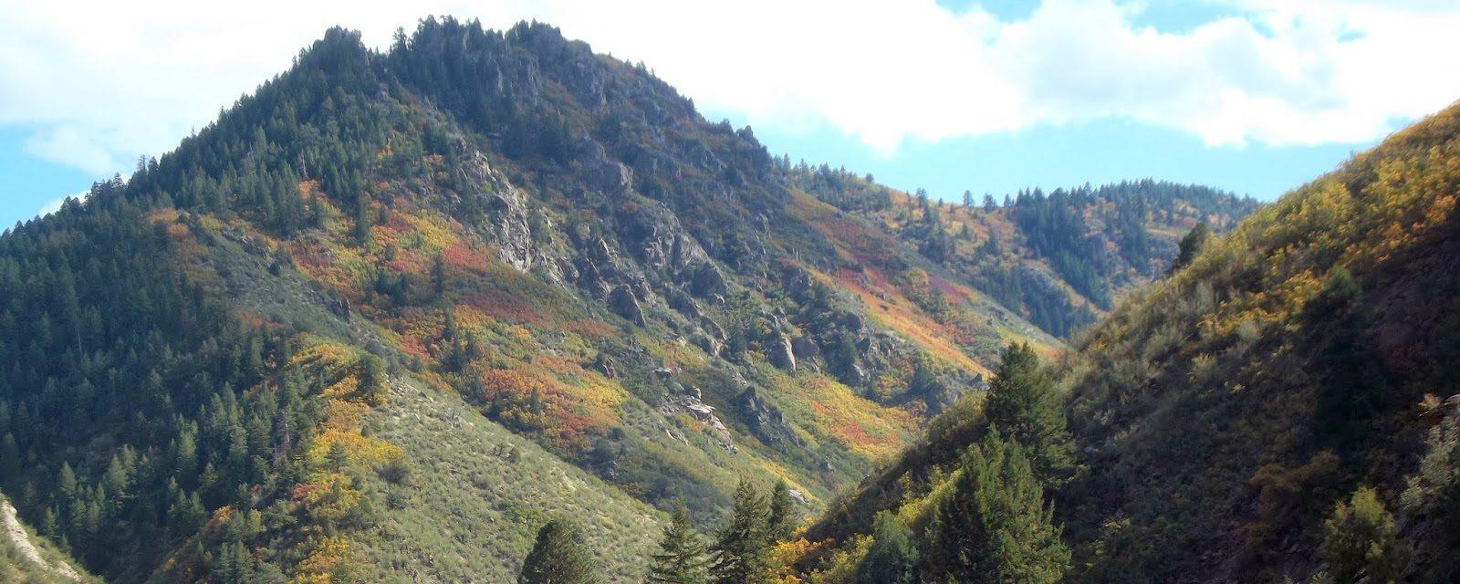 Autumn leaves in Waterton Canyon walking path