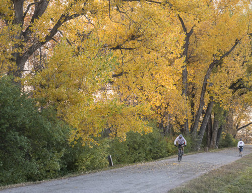 SUPPORT THE CANAL CANOPY ON COLORADO GIVES DAY – DECEMBER 5, 2017