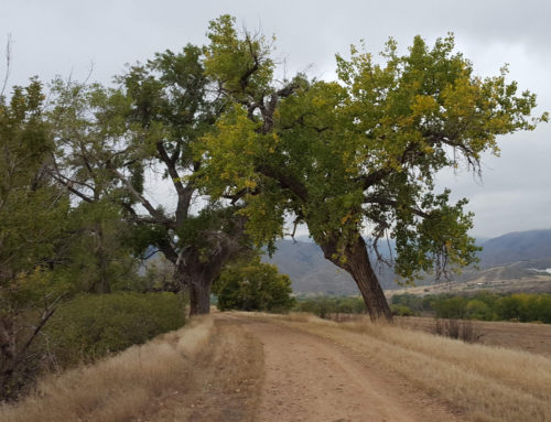 A walk along the trail in Douglas County – The Trail's Beginning: Miles 2-6